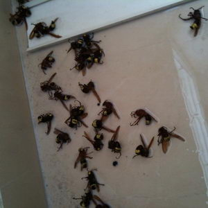 PestControl_103