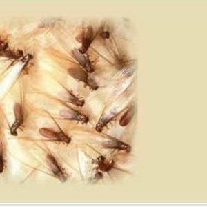 Termites_003