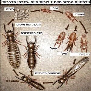 Termites_004