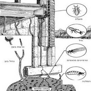 Termites_005
