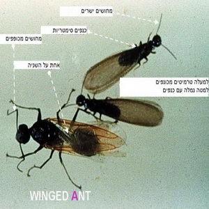 Termites_006